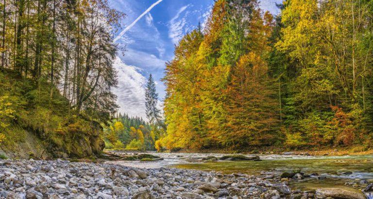 Taman Negara Rainforest: A Tropical Paradise